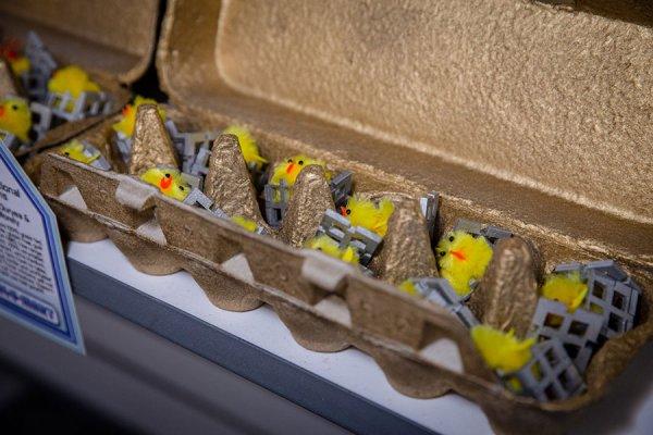 cage-eggs